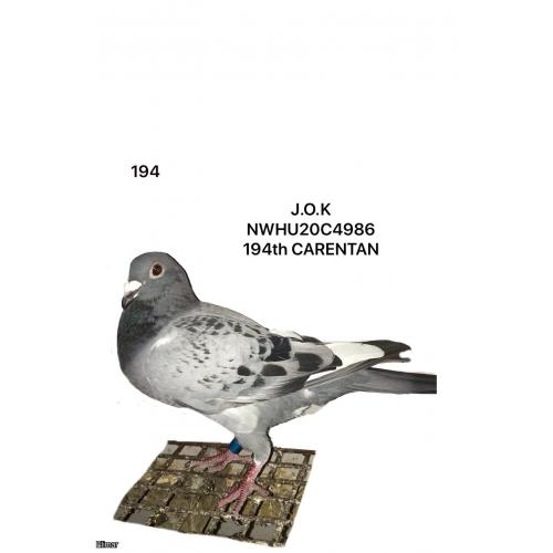 "Cheq WF Hen 20C4986 ""J O K "" 194th place Carentan"