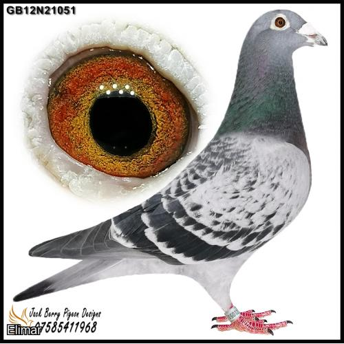 "GB12N21051 Chequer Hen g-d of ""Ronaldo"" 1st Nat & ""Full Try"" 1st National Ace Pigeon LD."