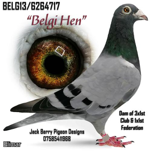 "Lot. 3. B13-6264717 Blue Hen ""Belgi Hen"" Bertels Corneel. Dam of 3x1sts. This hen like others from this family have bred many winners in club & fed. This is a real good hen."