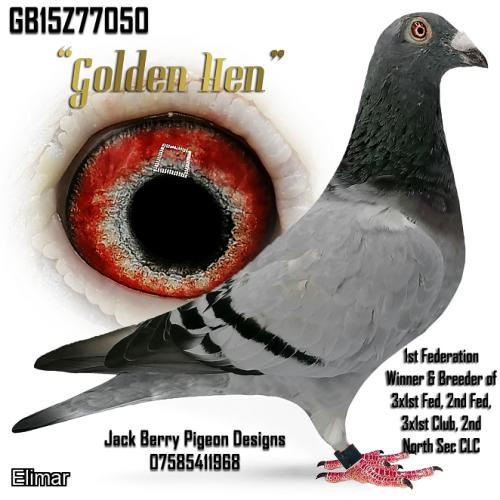 "Lot. 13. GB15Z77050 Blue Hen ""Golden Hen"" 1st Fed winner and mother to 3 x 1sts Feds"