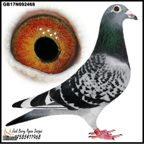 "GB17N092468 Chequer Pied Hen the high-quality Nation lines of ""Euro Diamond"" ""Titan"" ""I had a Dream"""