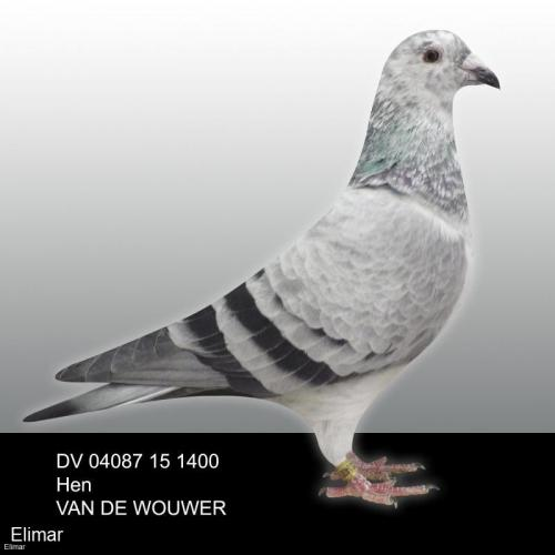 Grizzle Hen DV 04087 15 1400 Proven Breeder of winners. G.Daughter of OLYMPIC NIELS + Inbred KAASBOER!