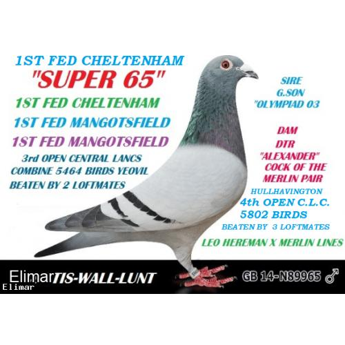 **CWL Super 65** This young bird is from CWL Super 65 X Daughter of Eijerkamp car winning ace Lambrecht Vale Jackpot
