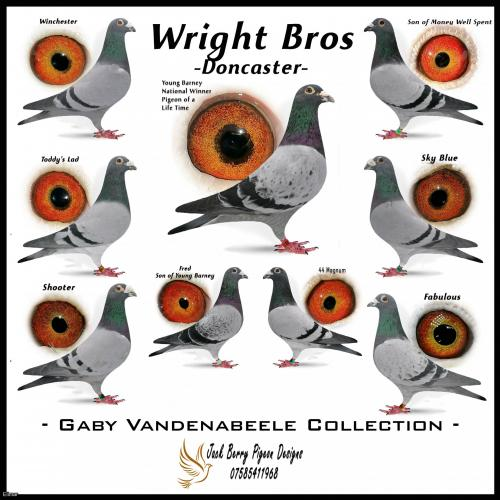 6 x 2021 Vandenabeele YB Bred by Watkins/Wright Bros Direct From the Stock Birds in Doncaster. Winners to ALL levels these