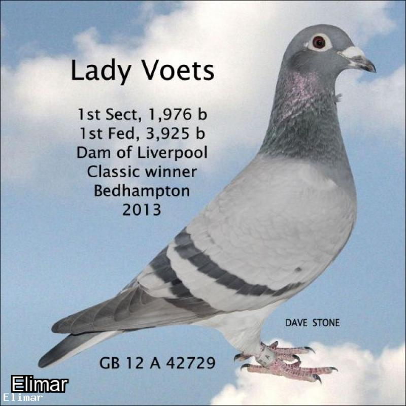 "Superb Blue Cock 19V95731 Direct Son of the 2006 warrior ""KEV'S BOY"" x the CREAM of PITBULL"