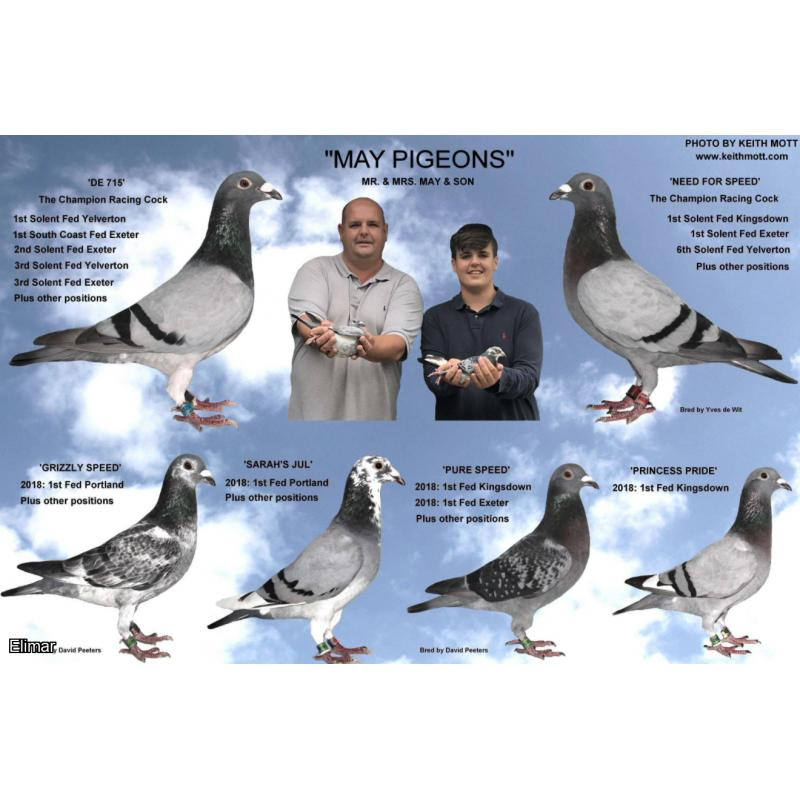 Lot 7 - May Pigeons. Choice of families. 1 x 2021 YB