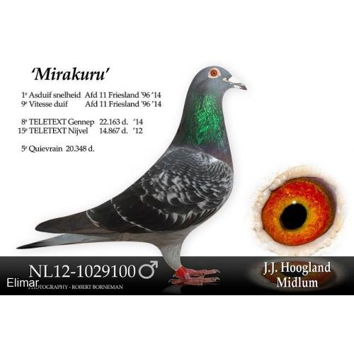 "Lot 27 - Cheq Hen NL18-1414116 Direct Jan Hoogland. G-Daughter of the brilliant ""MIRAKURU!"""