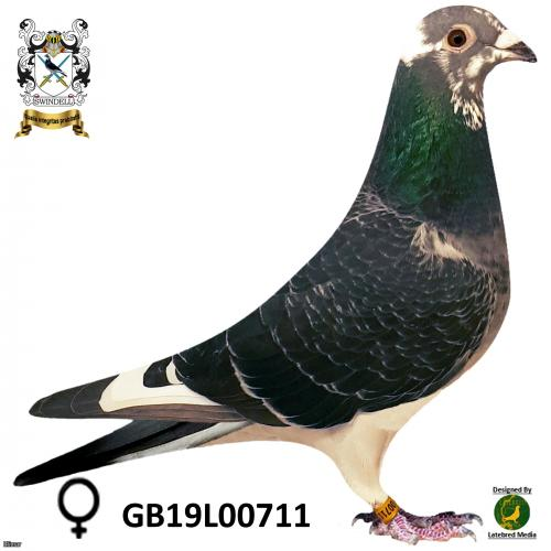 Stickers Donckers Dau of 4th open NIPA 18,564 birds.