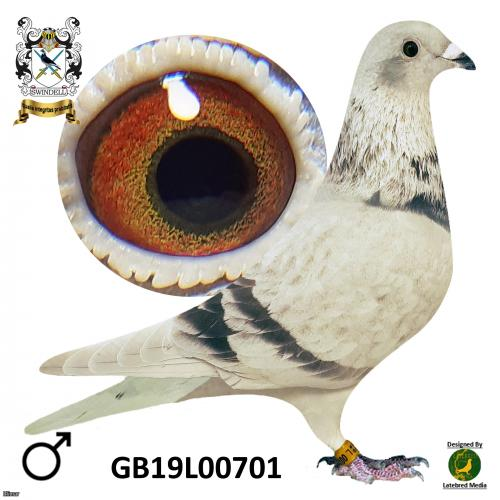 Stickers Donckers son of 4th open NIPA 18,564 birds.