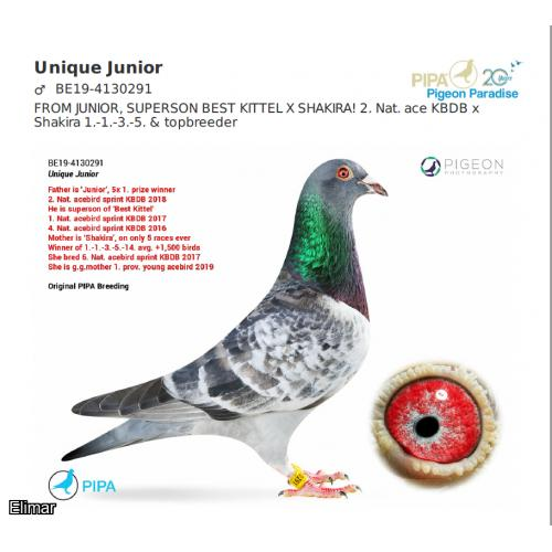Cheq Hen JUNIOR'S GIRL 20S46926 G.Daughter of JUNIOR 2nd Ace KBDB Superson of KBDB Champion BEST KITTEL