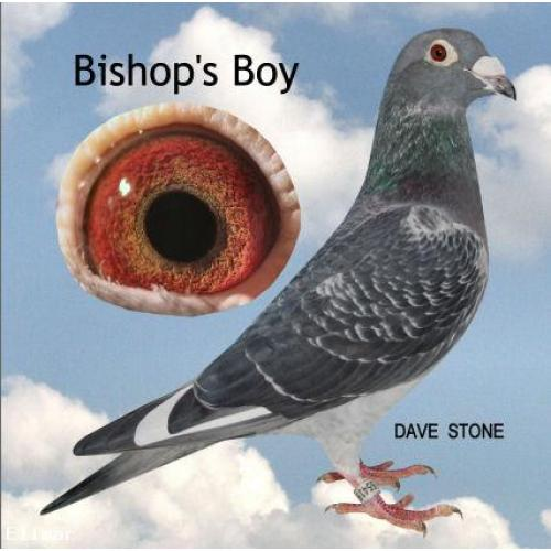SUPER OFFER - DIRECT SON OFF MY NO 1 SOONTJEN STOCK COCK - BISHOPS BOY