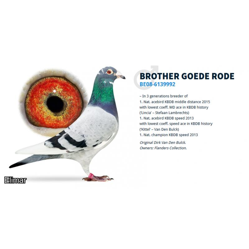 Dark Hen 18F07284 BROER GOEDE RODE and the original PITBULL of Aerts Bros