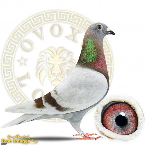 Sublime Mealy Cock 20Z1036. Features some RED HOT bloodlines.