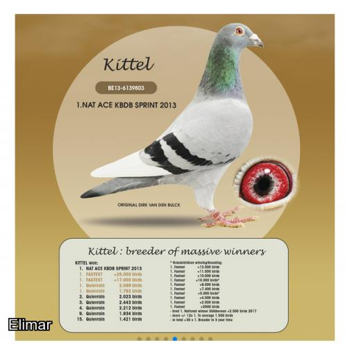 "Blue Hen 20B03524 Quite Beautifully Inbred to the Majestic ""KITTEL"". Fabulous genes here!"